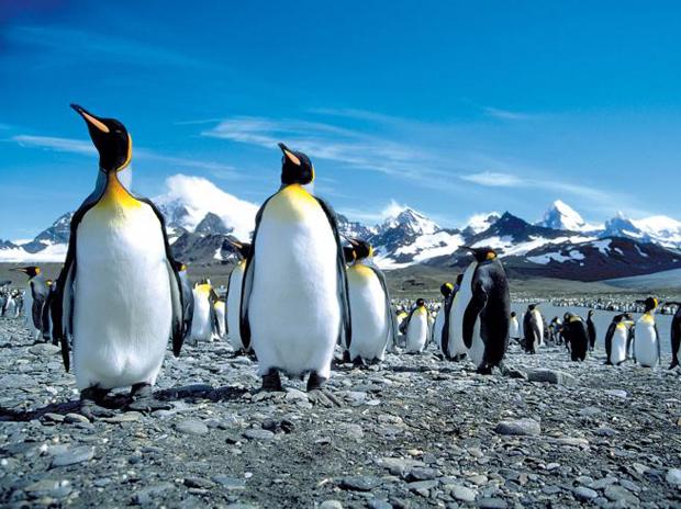 antarctica-falklands-zegrahm-wildlife