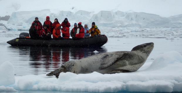 antarctica-xxi-wildlife