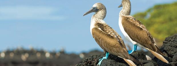 silverseas-cruises-galapagos-wildlife